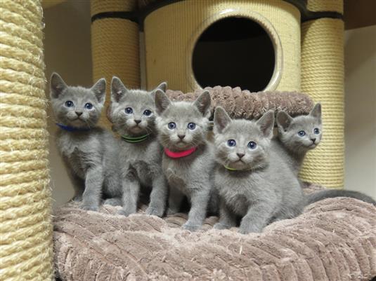 57c088a29 19.3. jsem přidala aktuální fotky koťátek od kočičky Olly.